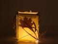 lamp wis 4c 800