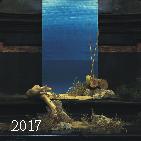 kt-2016